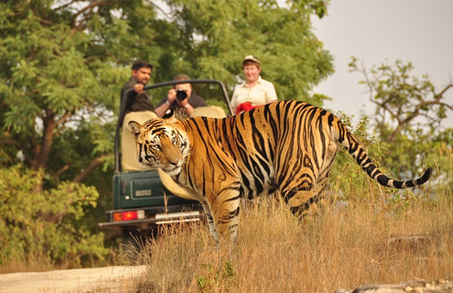 Indian Wildlife Tour