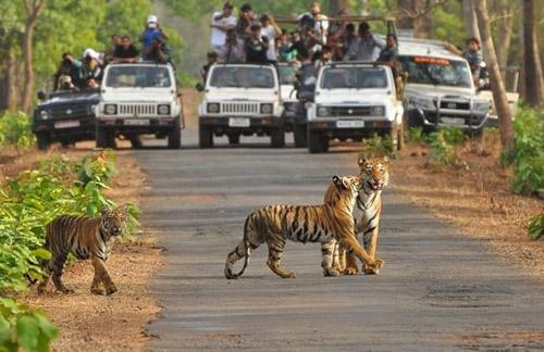 Wildlife Tour with Ranthambhore