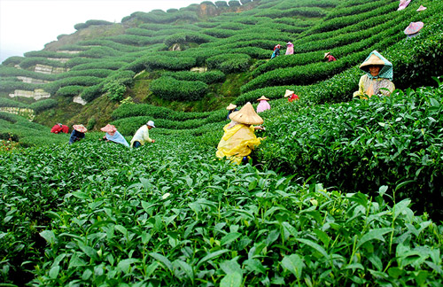 Tea Garden & Spice Tour