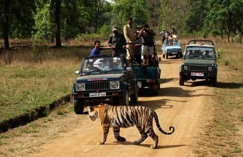 Wildlife Tour with Pench